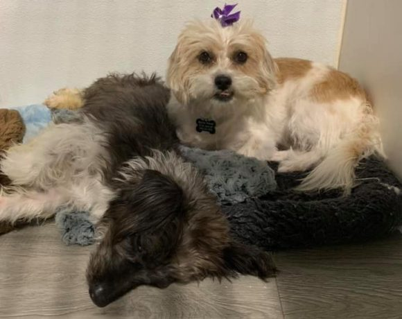 Pablo and Lucy! Available for adoption NOW!!